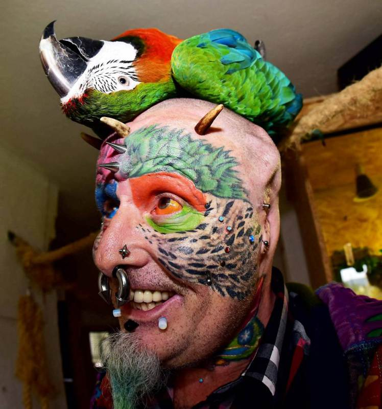 "Extreme body mod fan Ted Richards, AKA Parrot man - who has had his ears cut off to look like his parrot.Ted is pictured with his parrot Teaka. See SWNS story SWPARROT; A man who had his face and eyeballs tattooed to look like his pet parrots has gone a step further - by cutting off his EARS. Bonkers Ted Richards, 56, is obsessed by pets Ellie, Teaka, Timneh, Jake and Bubi and has his face tattooed with colourful feathers. But the animal nut - who has 110 tattoos, 50 piercings and a split tongue - has now had both his ears removed by a surgeon in a six hour operation. Eccentric Ted has given his severed ears to a friend who ""will appreciate them"" and is now planning to find a surgeon prepared to turn his nose into a BEAK."