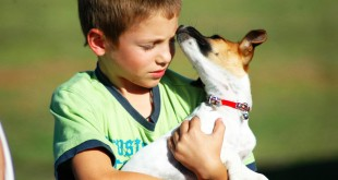 by learning a few simply rules your child can safely play with dogs